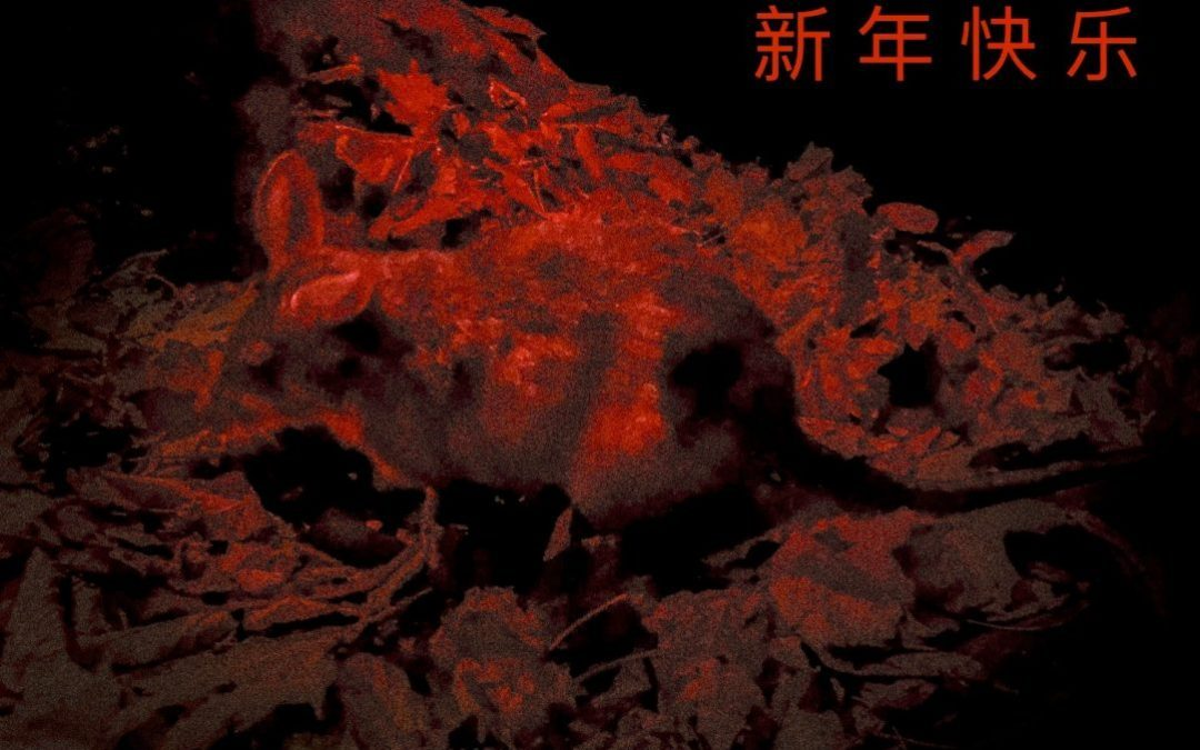 Greetings for 4719 – Chinese Year of the Rat